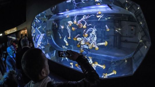Nausicaà devient le plus grand aquarium d'Europe