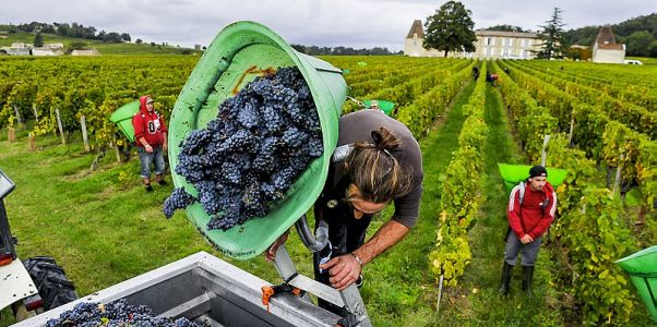 Pourquoi la production mondiale de vin a lourdement chuté en 2017